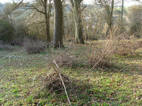 Protected coppice stools